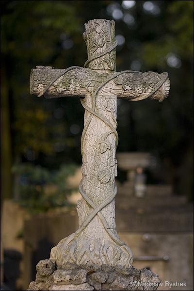 Bluszcz - symbol życia wiecznego, odradzanie.