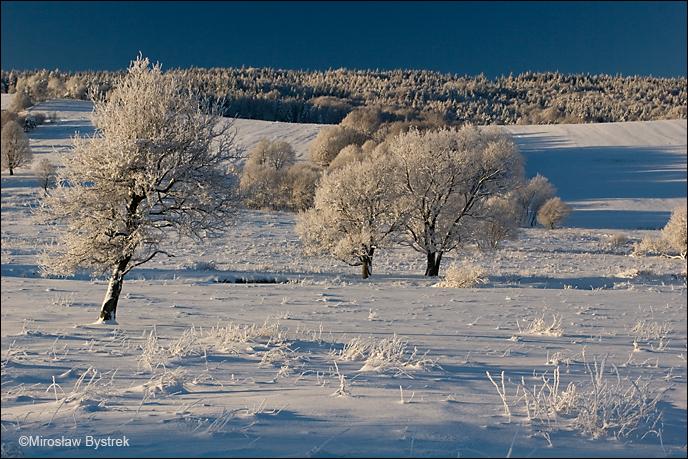 Beskid Niski zimą - okolice Koniecznej.